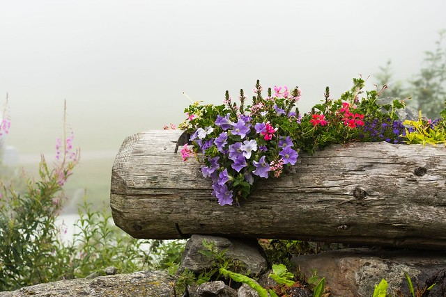 A walk in the mist