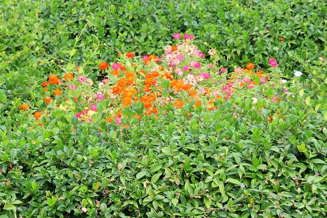 Flower in bush,,,,,