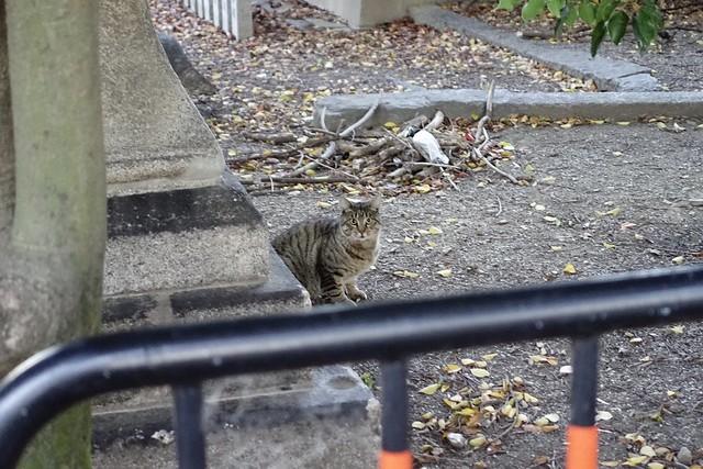 Today's Cat@2019-11-15