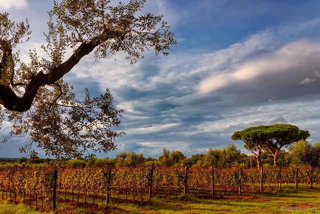 160 km di vino - Bolgheri / 160 kilometers of wine - Bolgheri