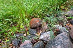 Lakefront stones