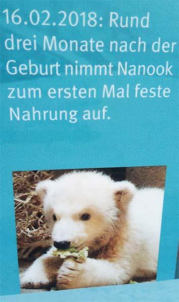 nanook5