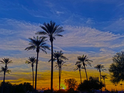 palmtrees palm trees suncitywest arizona sky sunset clouds color colors