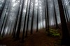 Im Zauberwald by Andi Fritzsch