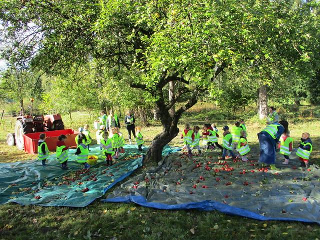 Ramassage des pommes (01/10/2019)