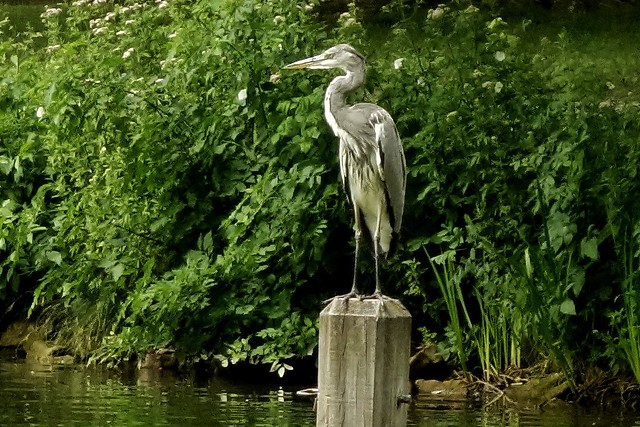 heron  on a Viewpoint , 76803/12102