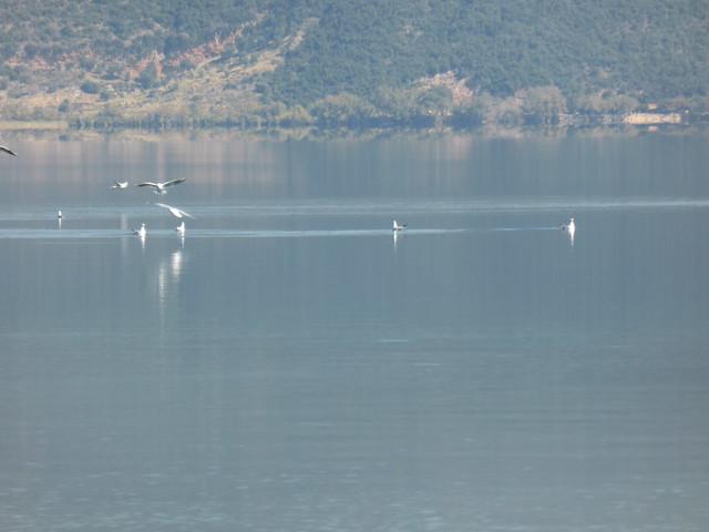 Λίμνη Τριχωνίδα!!  P1090603