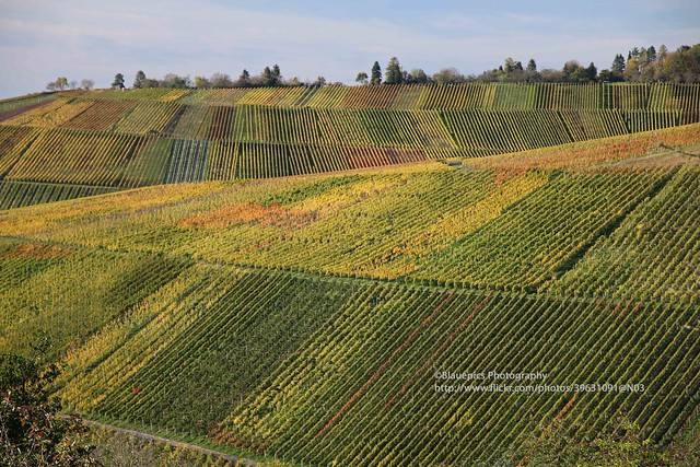 Schnait, vineyards in autumn colours