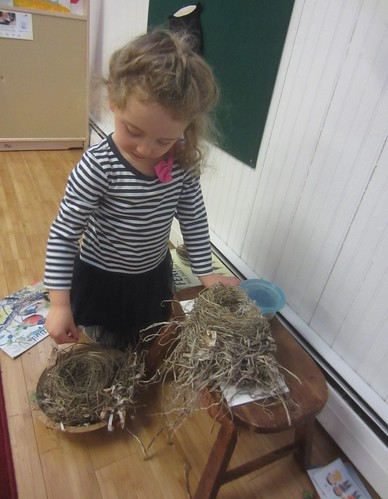 comparing the nests