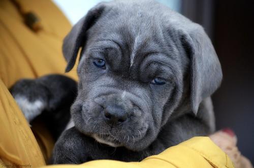 "Meet ""Kira""... My new member of my Doggie daycare service! :) She's little angel!!"