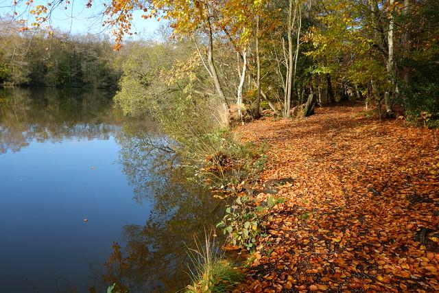 Woodland Autumn Floor..