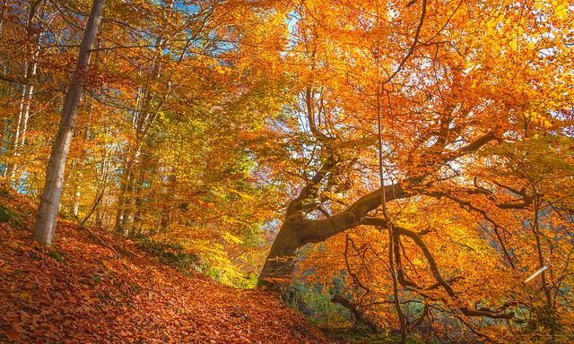 Autumn Collection - 12 - autumn foliage
