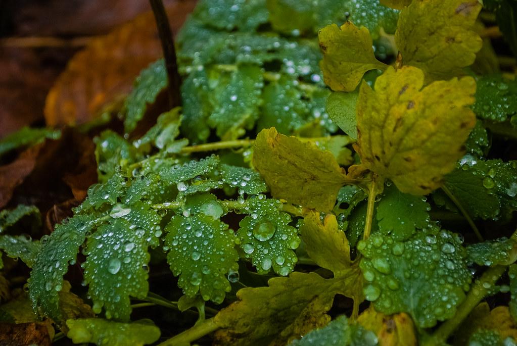 lovely water drops  14:05:54 DSC_3904