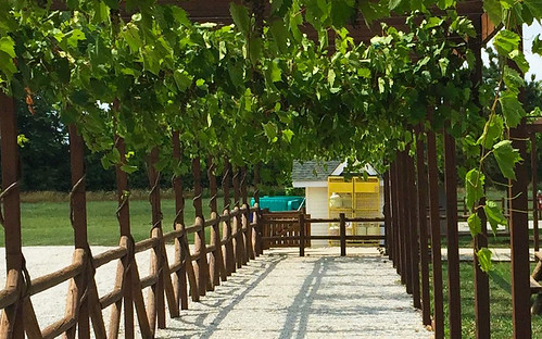 Pelee Island Winery Pavilion | by niceholidayphotos