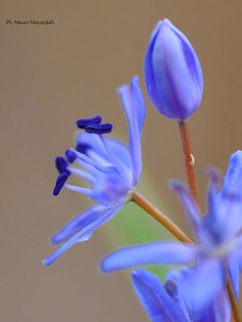 Fiore di marzo 1