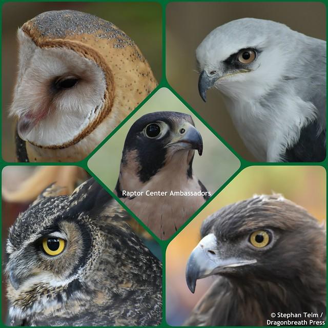 Raptor Center Ambassadors Collage