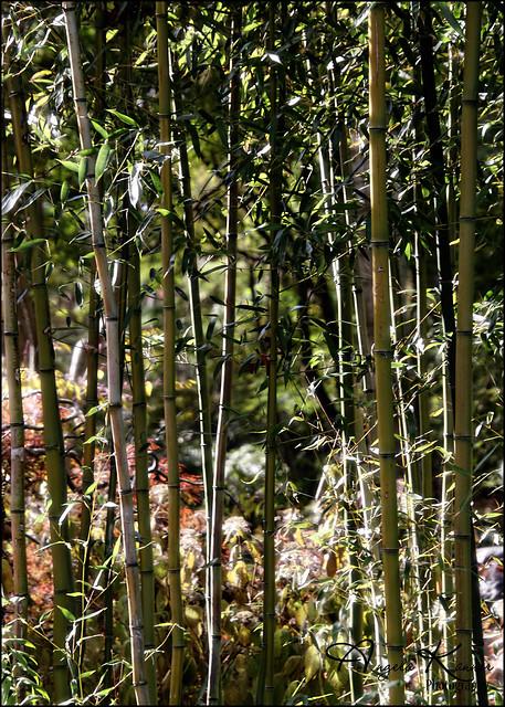 Not My Neighbors Bamboo...