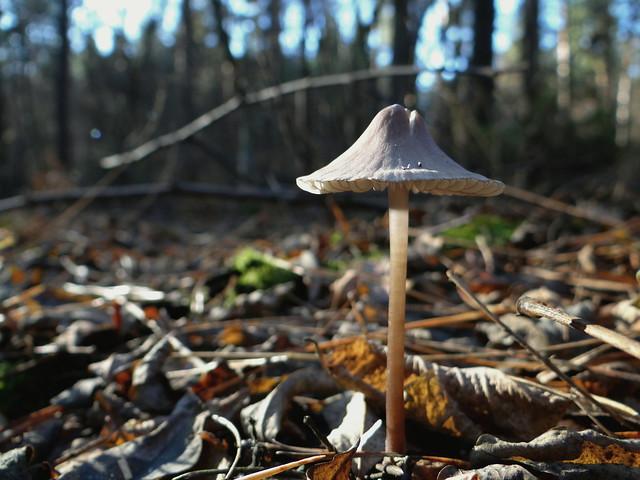 In the autumn forest. Lebedin city, Sumy region, Ukraine.