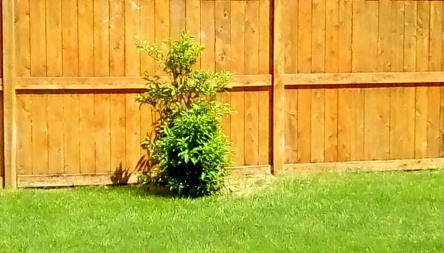 Small tree and fence! - HFF Menominee Michigan