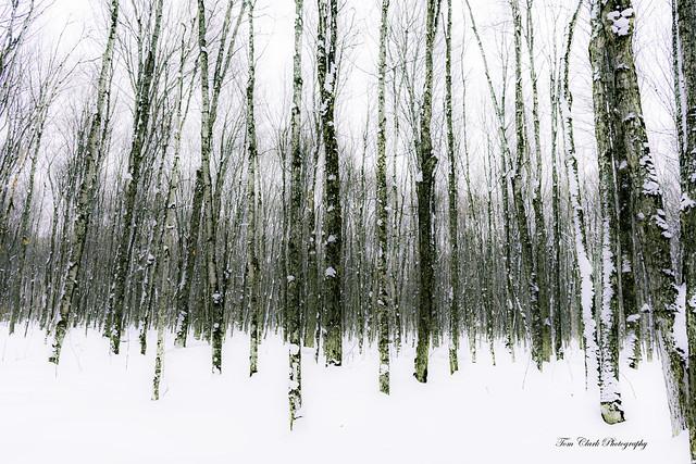 into the woods at Eben Cavesin Michigan's Upper Peninsula