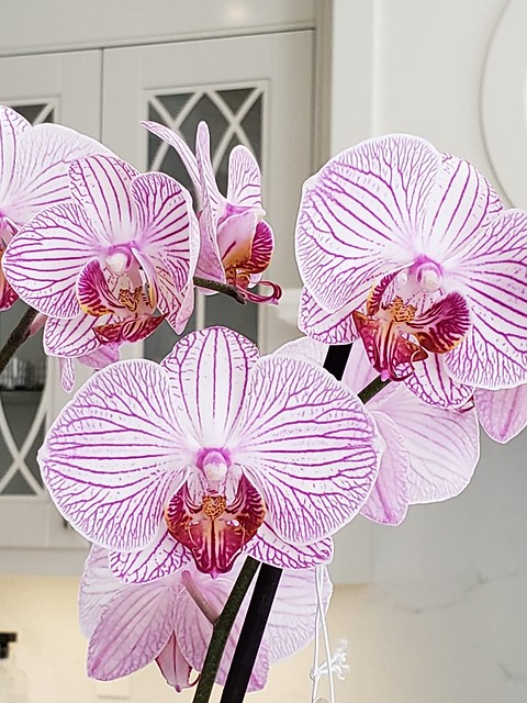Brampton Ontario - Canada - Alderlea Mansion  - Flower Garden - Pink Orchid