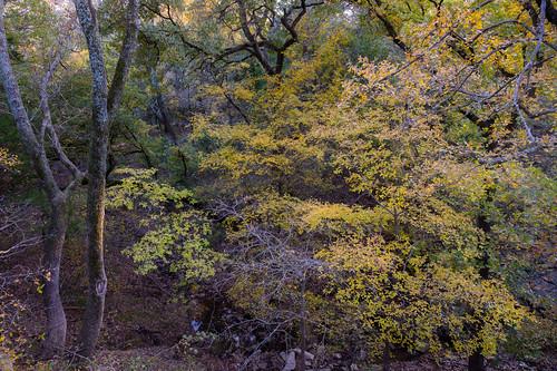 fall 2019 flowermound texas heritagepark nature landscape