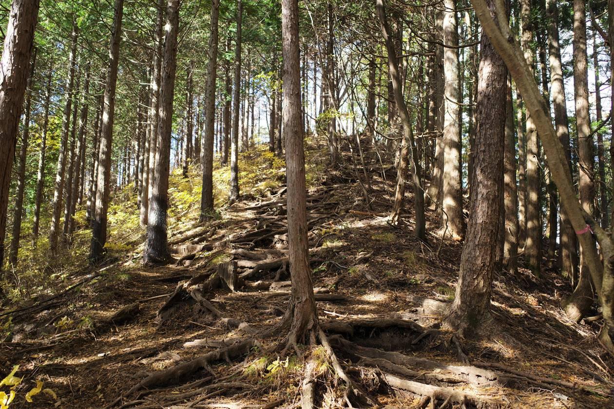 鳴虫山 樹林帯の登山道