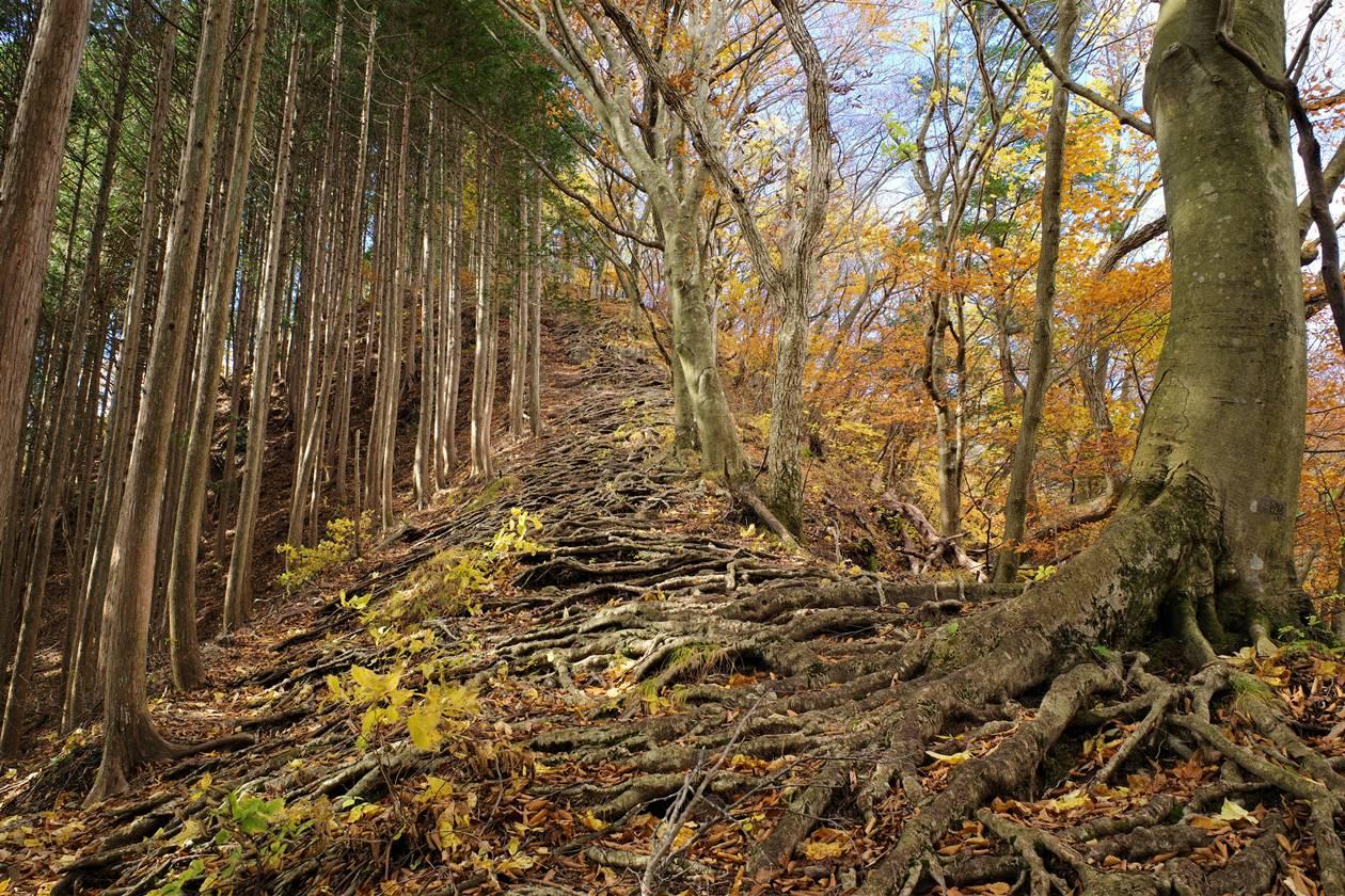 紅葉の鳴虫山 急登の登山道