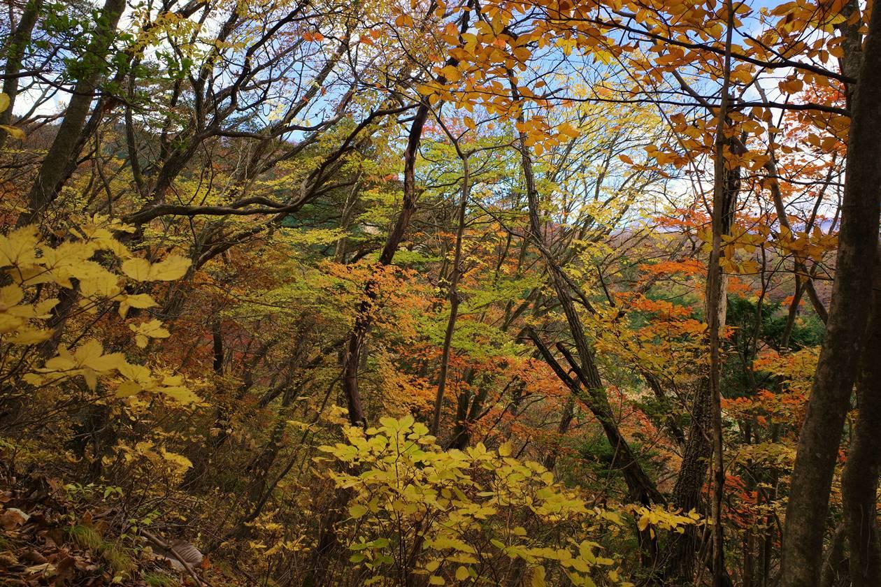 鳴虫山の紅葉風景