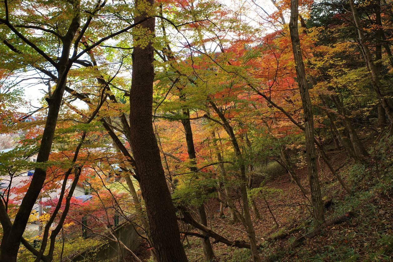 鳴虫山 日帰り紅葉登山