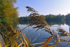 HerbstStillLeben  (由  Michael Döring