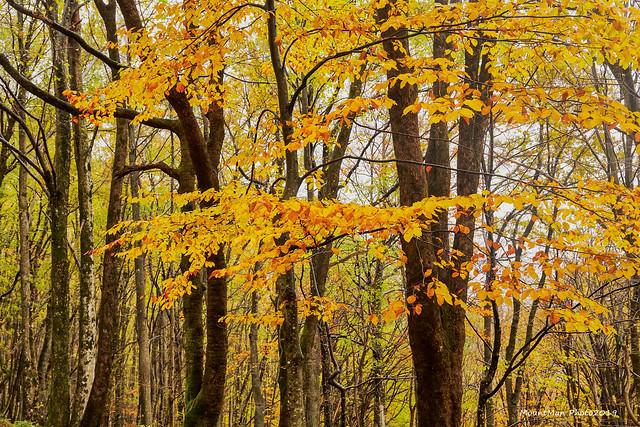 Jesen u šumama oko Klane, studeni 2019. (4)