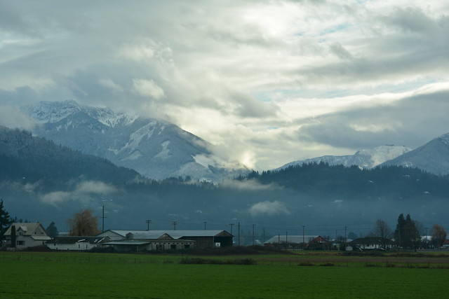EVEN THOUGH THE CASCADE MOUNTAIN PEAKS HAVE NEW WINTER SNOW, THE FRASER VALLEY USUALLY REMAINS GREEN,  NEAR CHILLIWACK, BC..