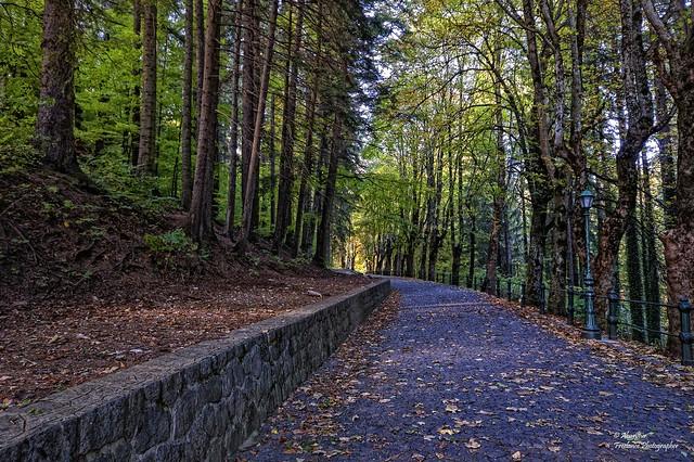 The shady pathway towards Peles Castle (Romania)