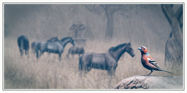 the bird and horses