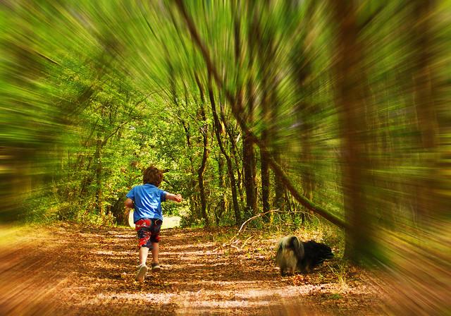 Promenons-nous, dans les bois …