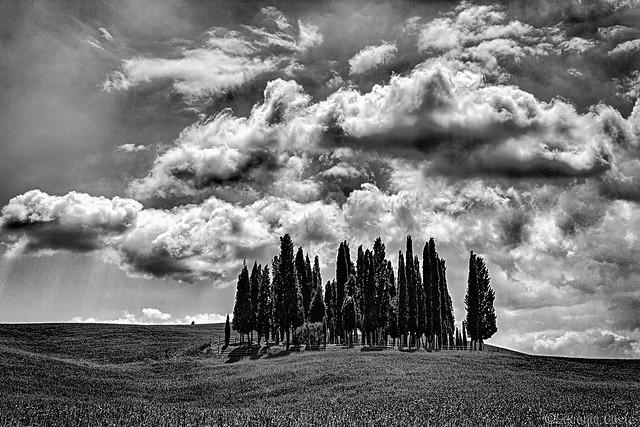 i Cipressi di San Quirico d'Orcia (vers.B/N) - the Cypresses of San Quirico d 'Orcia (vers. B/W)