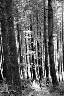 trees3_monochrome