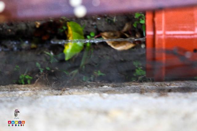 مزراب الأمطار والخير والخيرات والبركات ☔ قد تأخر نزول المطر .. ولكن الحمدلله والشكر لك يارب((أمطار الخير والبركة))  .. ربي يجعلها أمطار خير ع الجميـــع. . . #صورة_ألوان_ريفية.