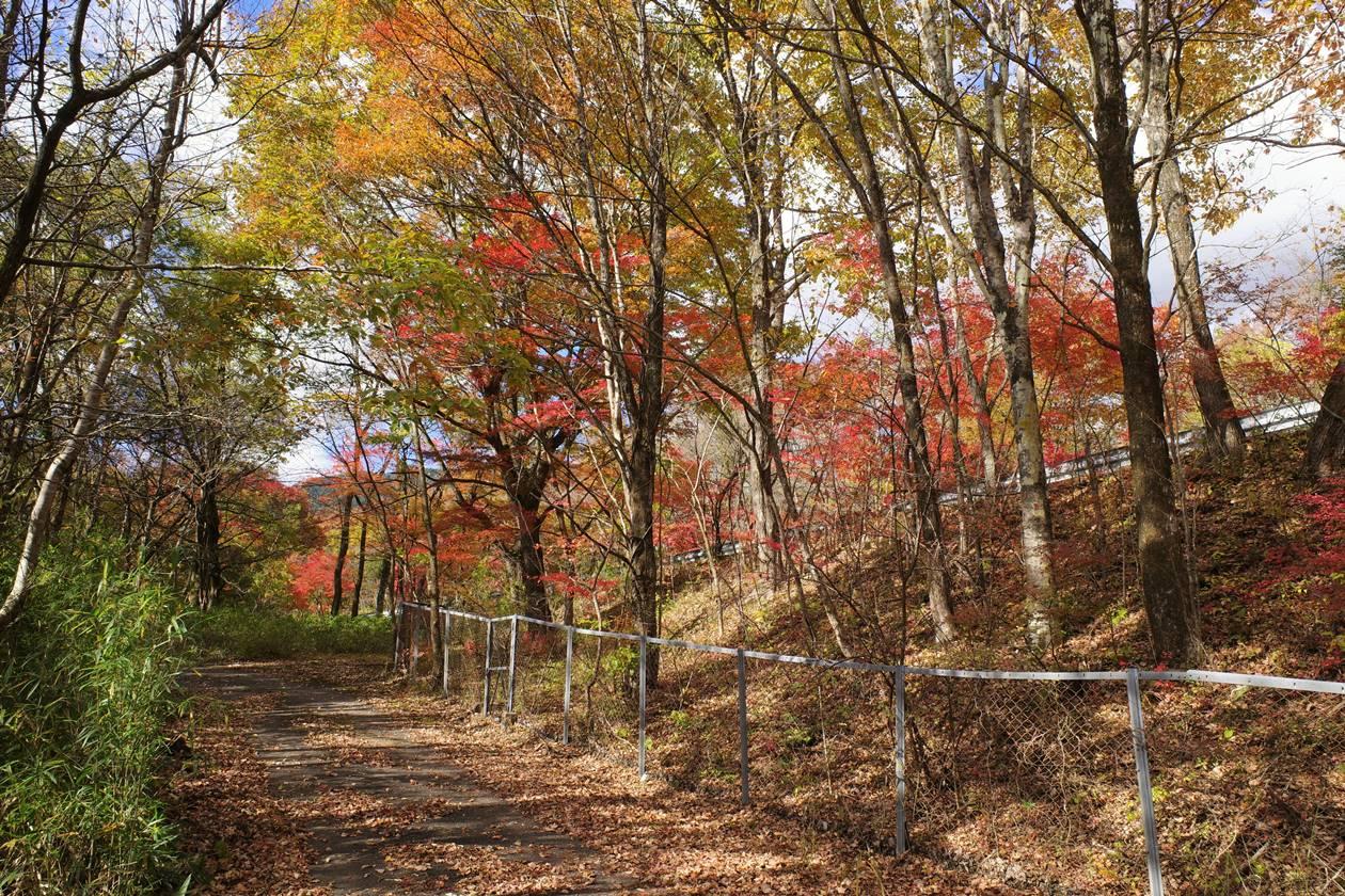 鳴虫山 紅葉登山