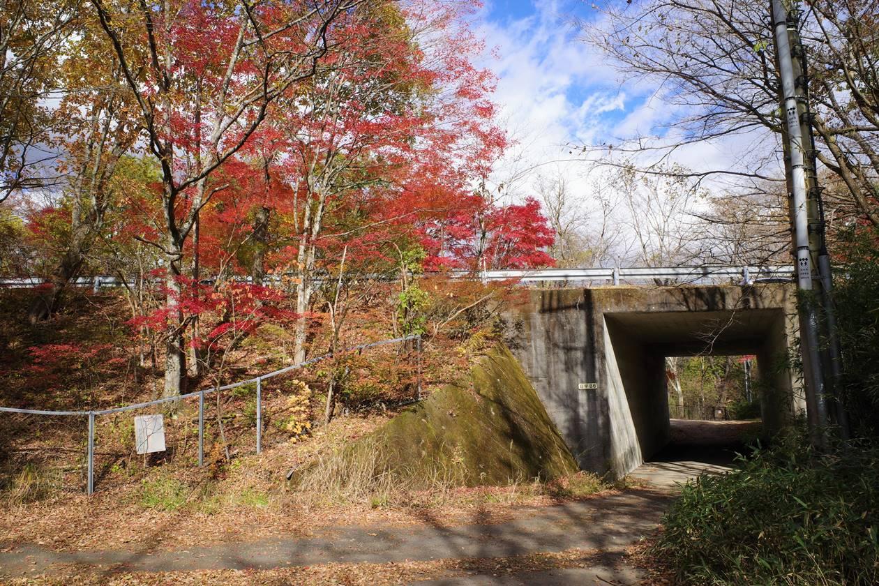 鳴虫山登山 高速道路下のトンネル