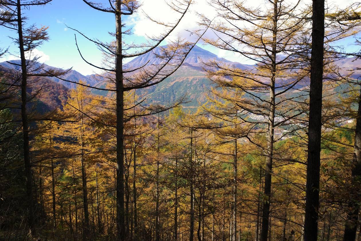 カラマツの紅葉と男体山