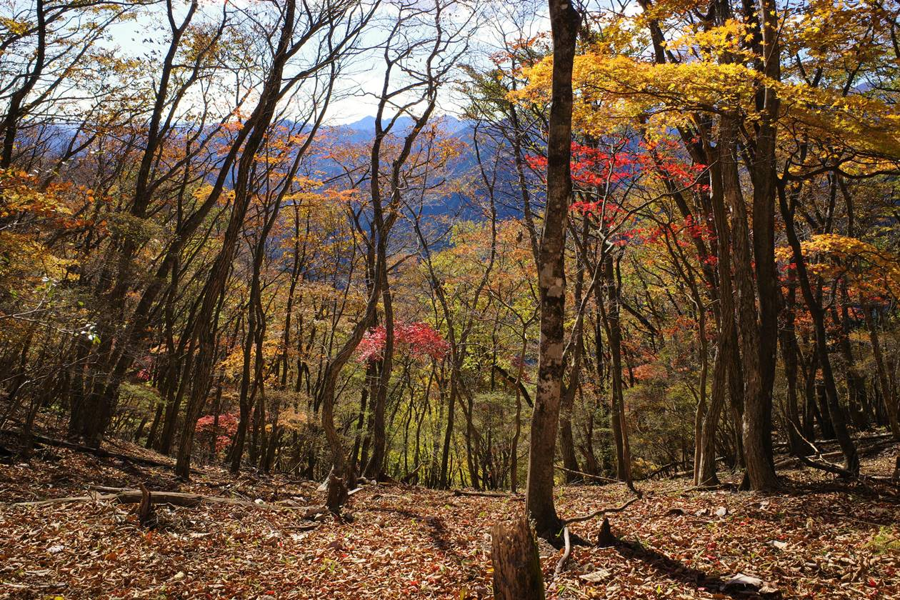 鳴虫山の紅葉