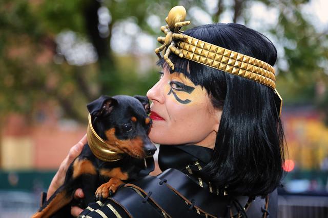 The egyptian pet