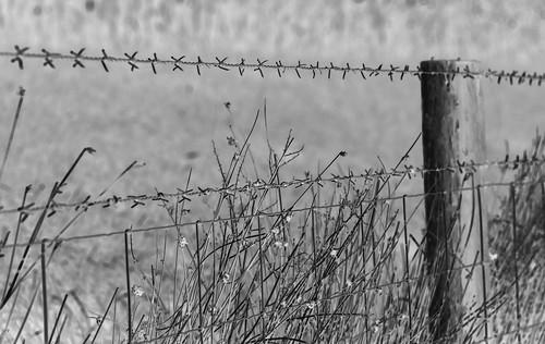 barbed_wire_invert