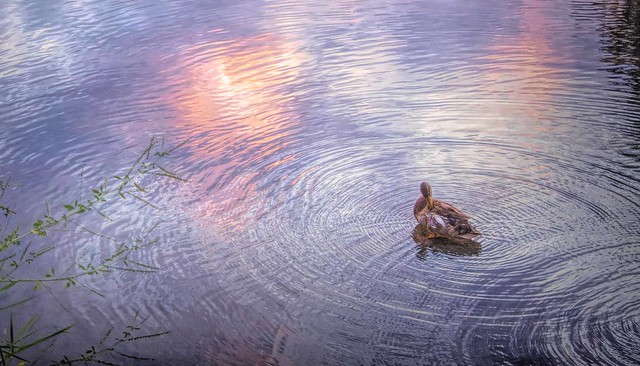 """But once you throw a stone, there are ripples in the pond, even if you remove the rock."" ~~ Jodi Picoult"