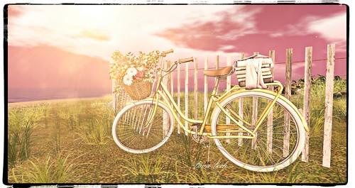 My summer bike