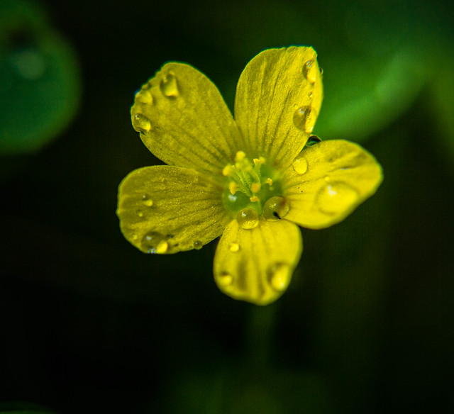 Tiny and yellow