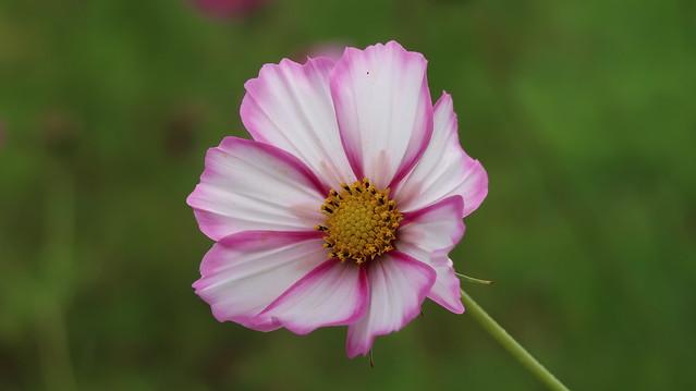 Day-Flower 2019