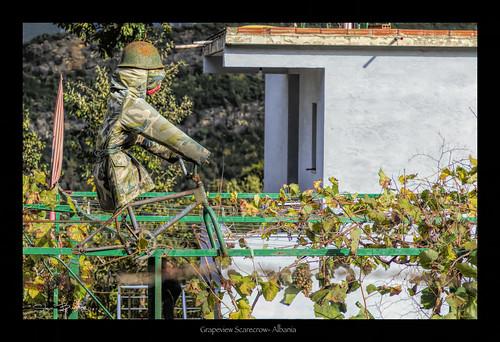 guardian vino grapes scarecrow albania tirana balkans